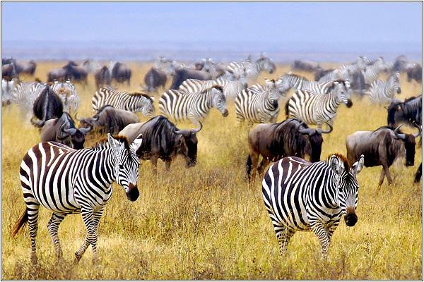 Животные на сафари в Африке