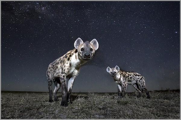 Ночное сафари в Африке