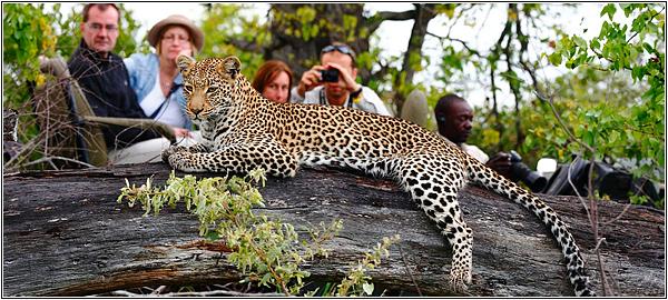 Сафари — фотоохота в Африке