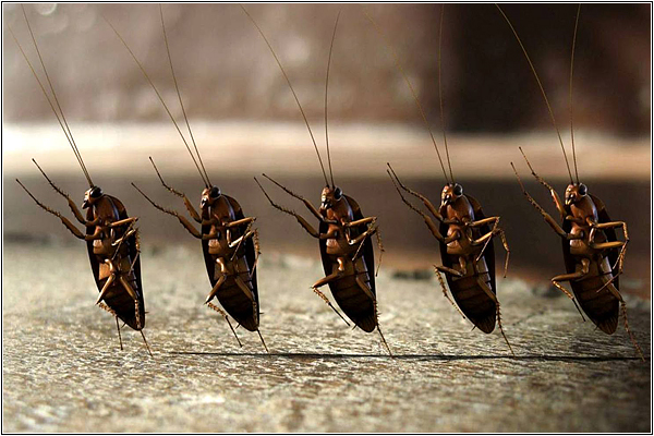 Тараканьи фермы в Китае