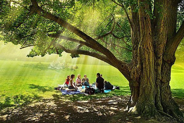 Пикник - маленькое путешествие