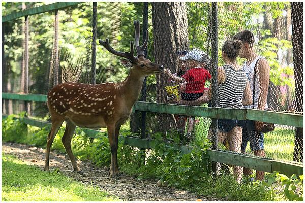 Томская писаница: Мини-зоопарк