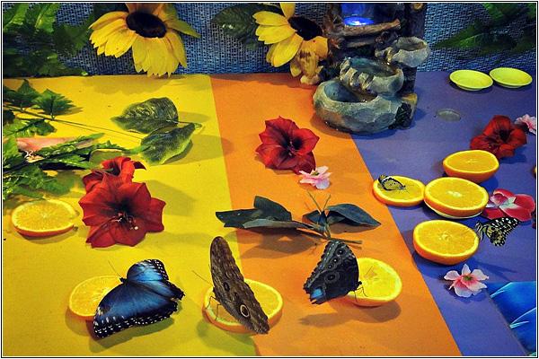 Бабочки в Солнцевском контактном зоопарке