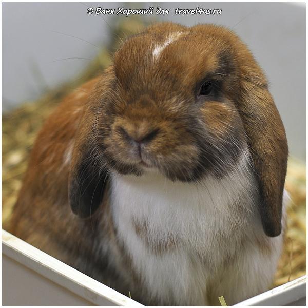 Кролик в Солнцевском контактном зоопарке