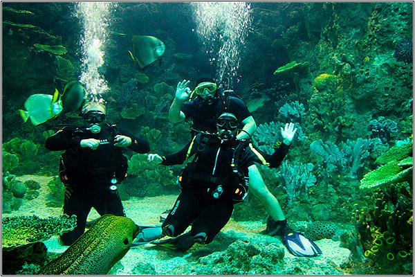 Дайвинг-центр в Sochi Discovery World Aquarium