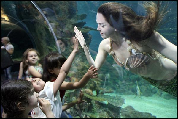Русалка в Sochi Discovery World Aquarium