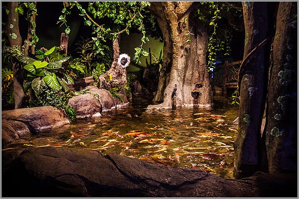 Тропический лес в Sochi Discovery World Aquarium