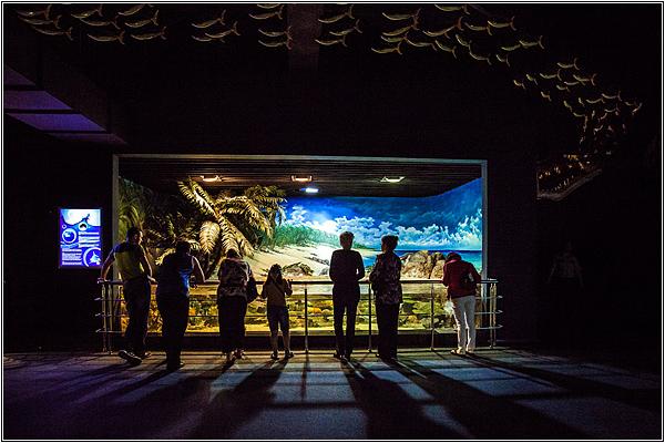 Экскурсии в Sochi Discovery World Aquarium