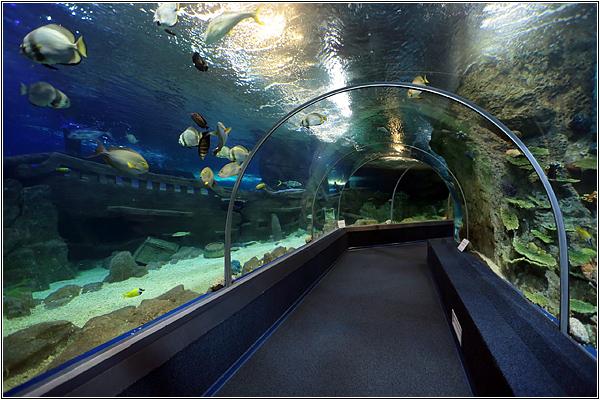 Останки затонувшего корабля в Sochi Discovery World Aquarium