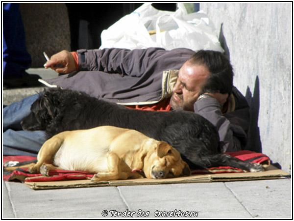 Мадридский бомж с собаками