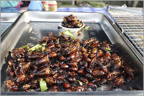 Жареные жуки на курортах Таиланда