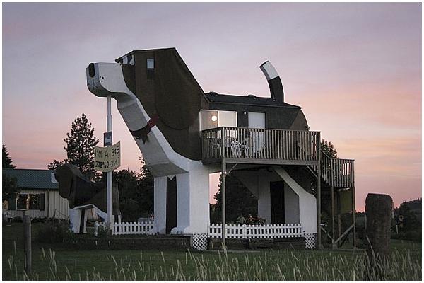 Миниотель-собака в США