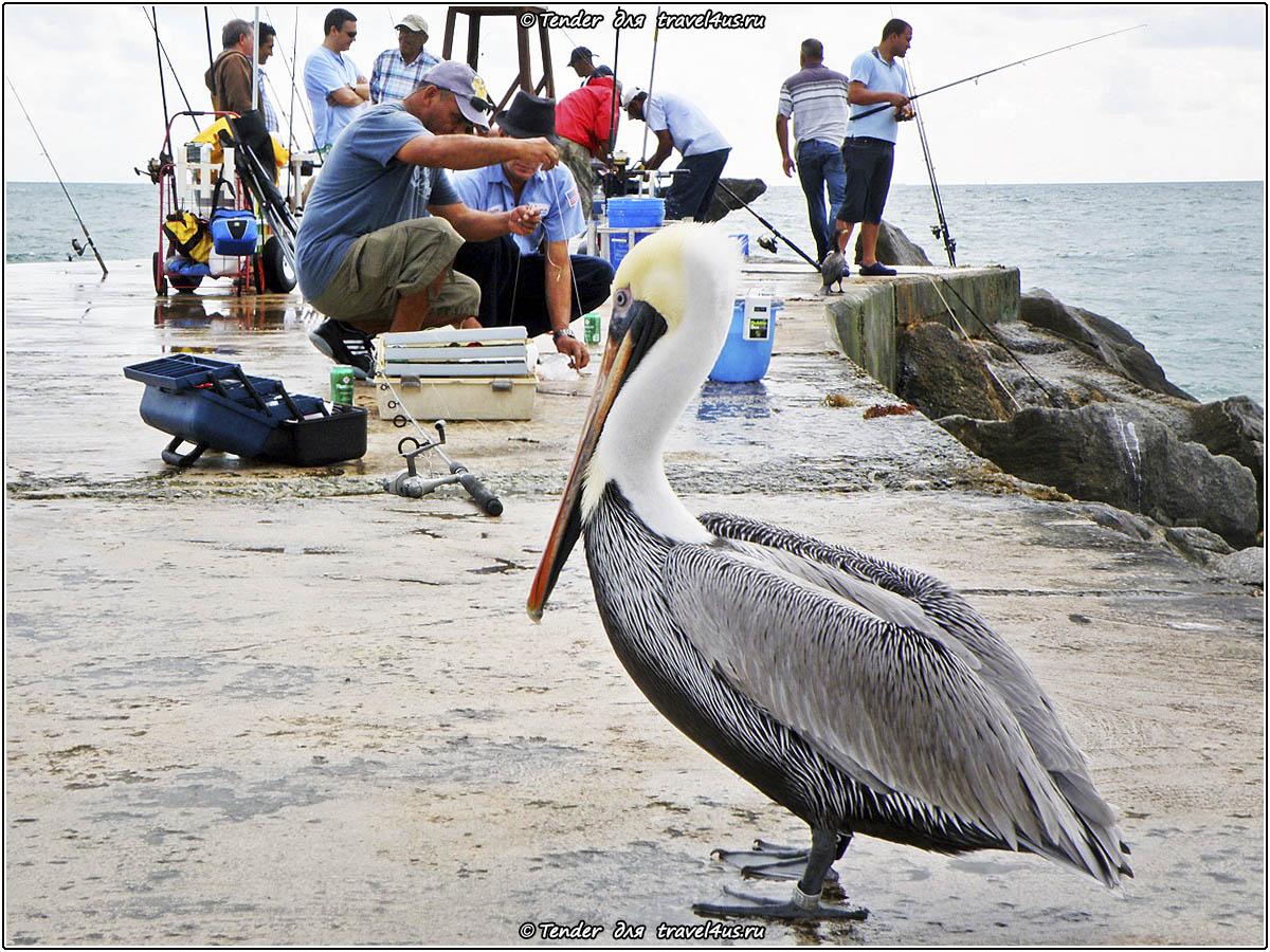 Рыбалка в Майами-Бич