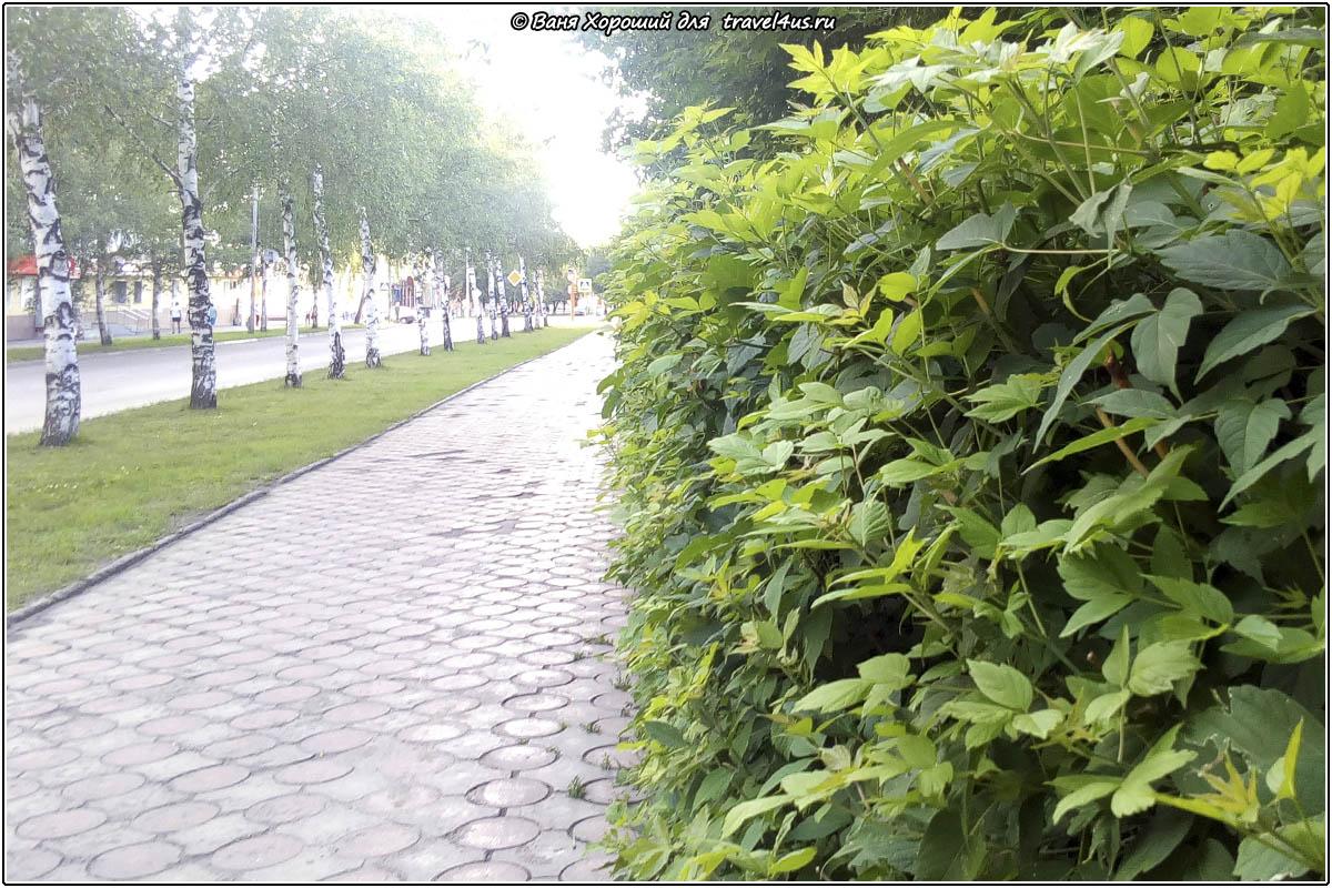 Зеленый город Анжеро-Судженск