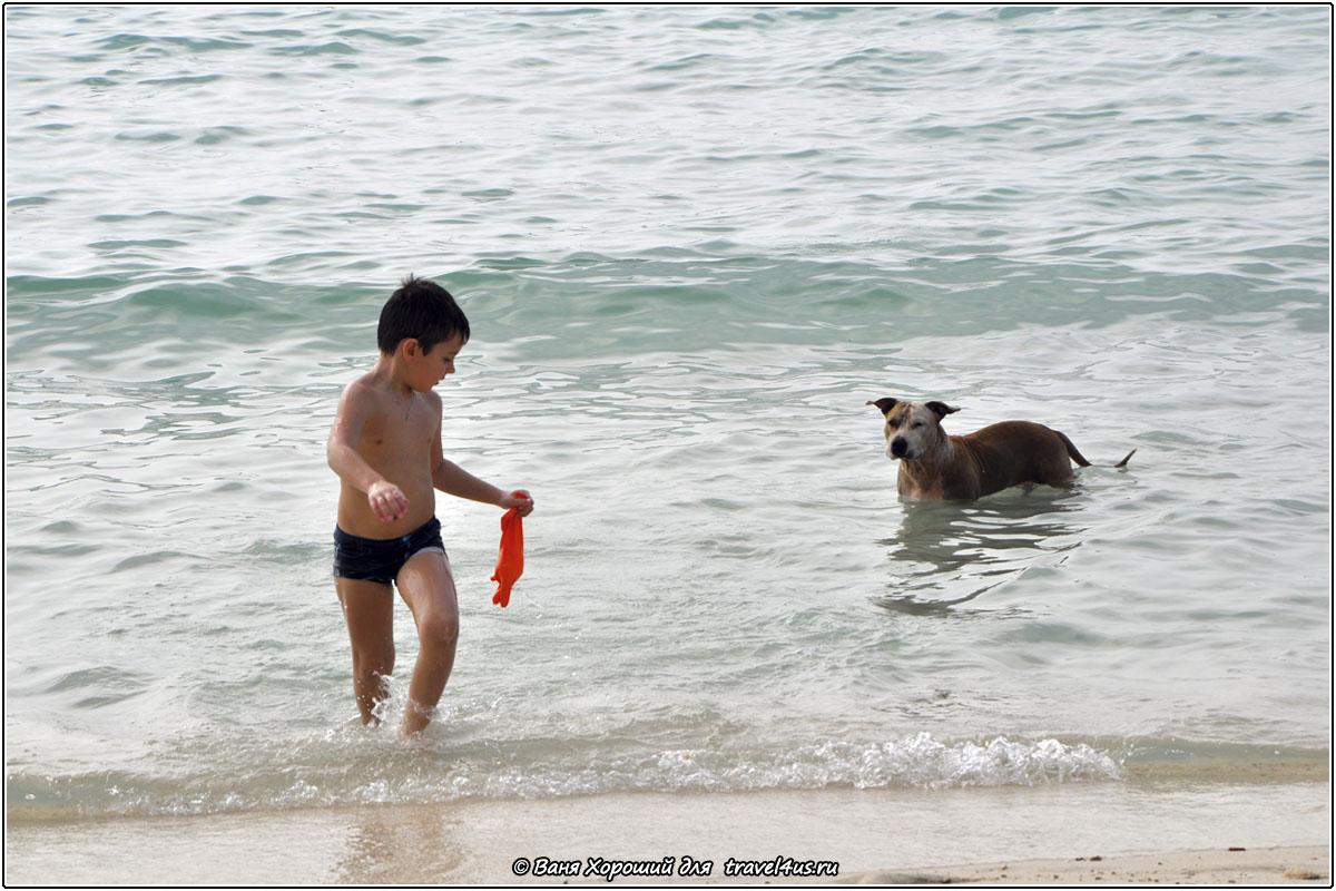 Море и собака