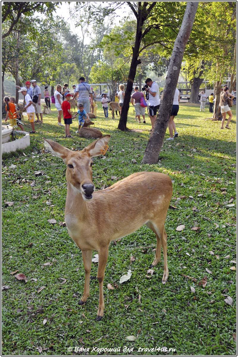 Общение с животными в Кхао Кео